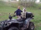 Смотреть изображение  мальчик сибирской хаски ищет девочку 40254649 в Новосибирске