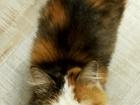 Увидеть изображение Потерялись животные Ищем дом для ласковой кошечки 45368561 в Новосибирске