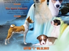 Басенджи, собака - которая не умеет лаять