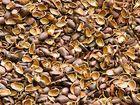 Свежее фотографию  Скорлупа кедрового ореха оптом и в розницу 56051592 в Новосибирске