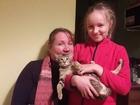 Смотреть foto Вязка кошек Срочно кошка ориенталка ищет котика 67890054 в Новосибирске