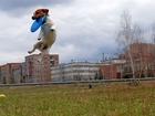 Свежее изображение Вязка собак Джек Рассел предлагает лапу и сердце, 68227562 в Новосибирске