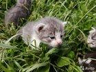 Котенок мальчик 4 недели
