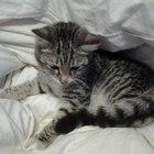 Кошка серая маленькая ж/м Плехановский