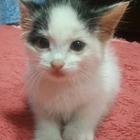 Отдадим котёнка: Милый, добрый, красивый, и умный котёнок