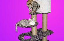 Домики, игровые комплексы для кошек