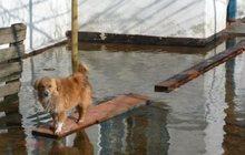 Откачка воды из затопленных помещений