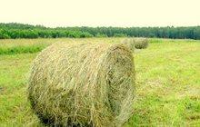 Продам сено в рулонах, Разнотравье