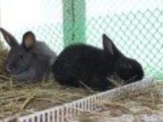 Свежее фотографию  Продам кроликов 32662070 в Новосибирске