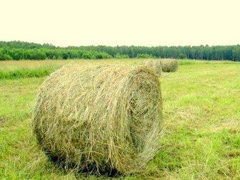 Скачать фото Корм для животных Продам сено в рулонах, Разнотравье, 33071008 в Новосибирске