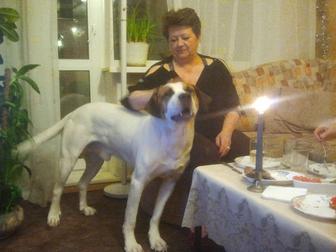 Просмотреть фото Отдам даром - приму в дар Ищу хозяев для собаки компаньона 49264452 в Новосибирске