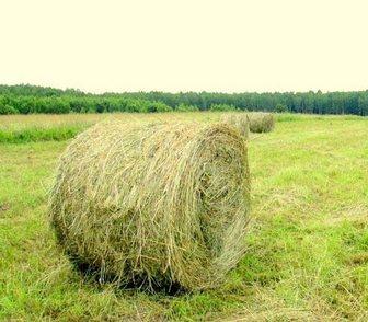 Фотография в Домашние животные Корм для животных Продам сено в рулонах. Разнотравье. От 3х в Новосибирске 600