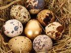 Изображение в Домашние животные Птички Инкубационное яйцо перепелов: Техасские, в Омске 10