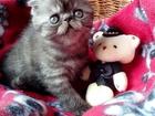 Фотография в Кошки и котята Продажа кошек и котят Котята родились 04. 05. 16. 2девочки и мальчик в Омске 0