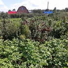 Садовый участок в СНТ «Сибирь», 7 соток, без строений в районе ж, д, станции «Пе