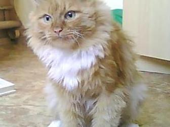 Уникальное фотографию Продажа кошек и котят Отдам кота 36171533 в Омске