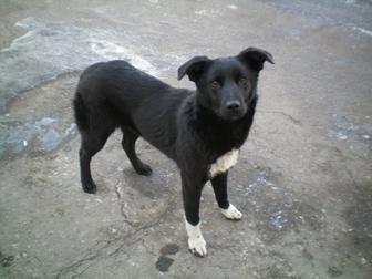 Скачать фотографию Отдам даром - приму в дар Охранная собака 38684209 в Омске