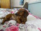 Уникальное изображение Найденные Пропала собака 32475293 в Оренбурге