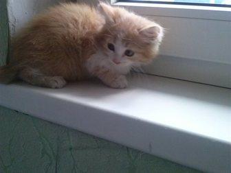 Свежее foto Отдам даром Отдам котенка в добрые руки 33379884 в Оренбурге