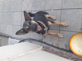 Скачать бесплатно foto Отдам даром - приму в дар Отдам собаку в хорошие руки 36944795 в Оренбурге