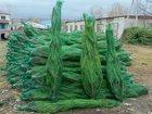 Фотография в Домашние животные Растения Свежесрезанные живые новогодние сосны оптом. в Пензе 75