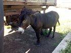 Фото в   В развитии конного спорта и агротуризма, в Пензе 0