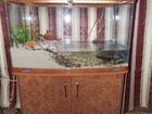 Фотография в Рыбки (Аквариумистика) Купить аквариум продам аквариум 250 литров на тумбе с крышками в Пензе 0