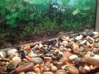 Изображение в   Продам панорамный аквариум в отличном состоянии в Пензе 1600