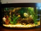 Просмотреть изображение Купить аквариум продам аквариум 38629331 в Пензе