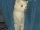 Скачать бесплатно foto  Где ты красавица?!) Очень добрый котик ищет свою судьбу! 41880329 в Пензе