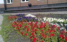 Цветы постоянноцветущие, Клумбы и цветники