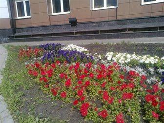 Уникальное фотографию Ландшафтный дизайн Цветы постоянноцветущие, Клумбы и цветники, 32484406 в Пензе