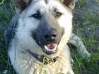 Свежее фотографию Потерянные Пропала собака 34296697 в Перми