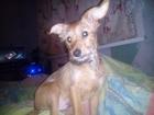 Свежее изображение  Отдам собачку в добрые руки 38750764 в Перми