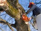 Увидеть фотографию Другие строительные услуги Кронирование, укрепление, удаление деревьев 38851870 в Перми