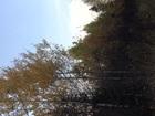 Увидеть фото  Продам земельный участок 20 сот, 40488797 в Перми