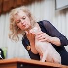 Кот породы Донской сфинкс ищет невесту для продолжения рода