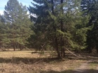 Смотреть фото Земельные участки Продаю земельный участок 3,5 гектара в собственности 69382343 в Первоуральске