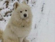 Помогите, пожалуйста, найти собаку Дорогие друзья, пропала собака 13 апреля по к