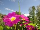 Скачать бесплатно фотографию Земельные участки продам 32940917 в Петрозаводске