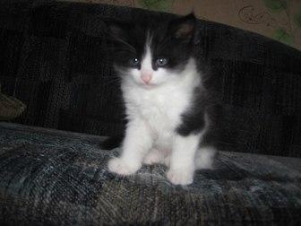 Просмотреть фотографию Отдам даром - приму в дар Отдам котят 33660300 в Петрозаводске