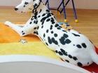 Фото в Потерянные и Найденные Потерянные Пропала собака-Далматин, нашедших просьба в Пятигорске 777