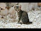 Свежее фото Отдам даром Подарю котят, 32881596 в Подольске