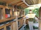 Скачать бесплатно foto  Кролики Калифорнийцы 37830965 в Подольске