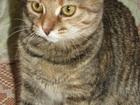 Фотография в Потерянные и Найденные Потерянные Имя кошки Плюша. Потерялась на улице Октябрьский в Пскове 0
