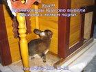 Скачать фото Грызуны Кролики породы рекс, 32663406 в Раменском