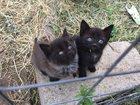Изображение в  Отдам даром - приму в дар Отдам милых, забавных, ласковых котят в хорошие в Раменском 0
