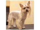 Новое изображение Стрижка собак Стрижка собак и кошек в Раменском 41624720 в Раменском