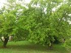 Новое foto Земельные участки Участок с домом, квадратной формы 66421009 в Раменском