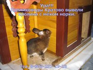 Кролики породы рекс Вид- кастор. возраст от 3 до 7 месяцев